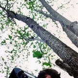 Imagen del artista George Harrison