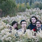 Imagen del artista Twin Peaks
