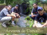 Foto de Árvores de Carvalho