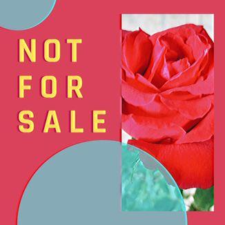 Foto da capa: Not For Sale