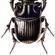 Imagem de Escaravelho