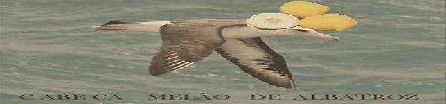 Cabeça Melão de Albatroz
