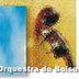 Lipe Portinho & Orquestra de Bolso