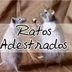 Ratos Adestrados