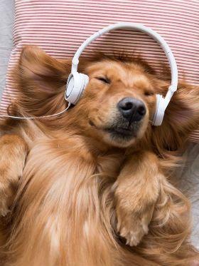 3 situações em que música exerce influência no cotidiano de animais