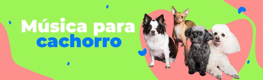 músicas para cachorro