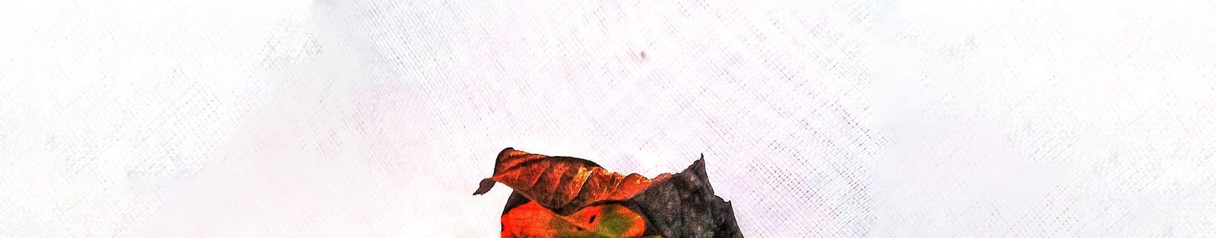 Imagem de capa de Gustavo Simas