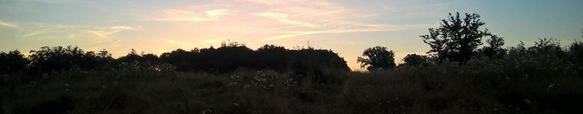 Imagem de capa de Wawrzeniec