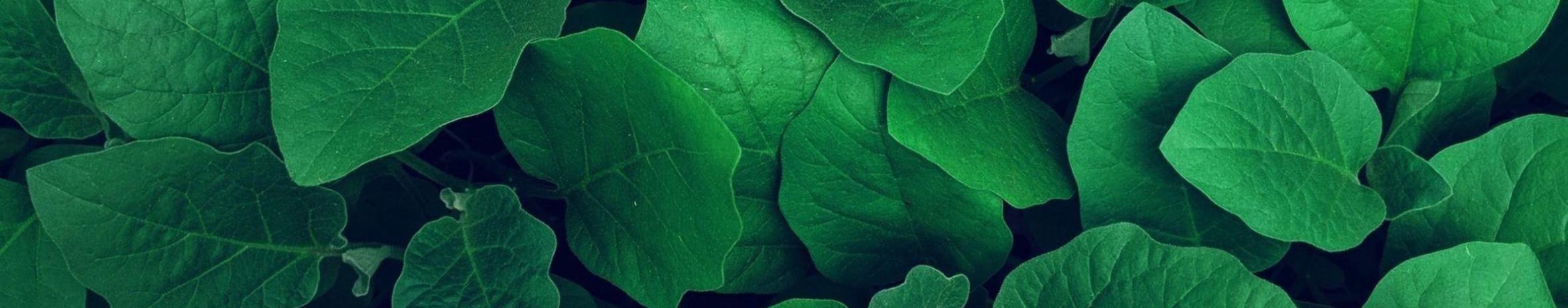 Imagem de capa de Naticongoo