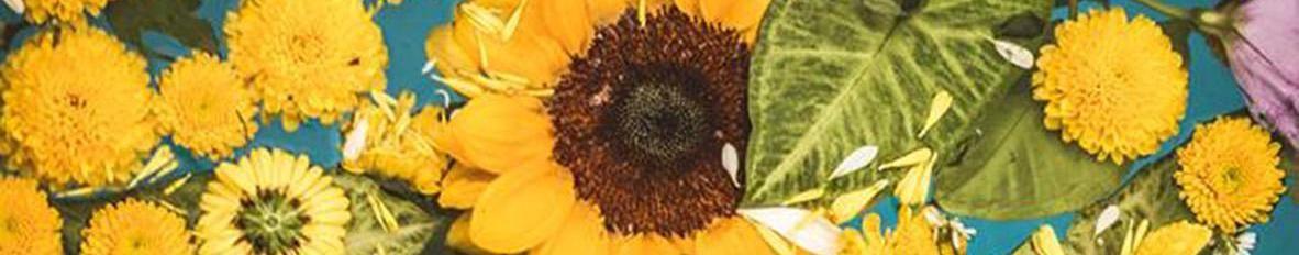 Imagem de capa de Bolhazul