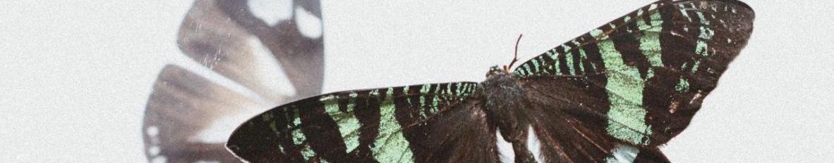 Imagem de capa de Lorenza Junqueira