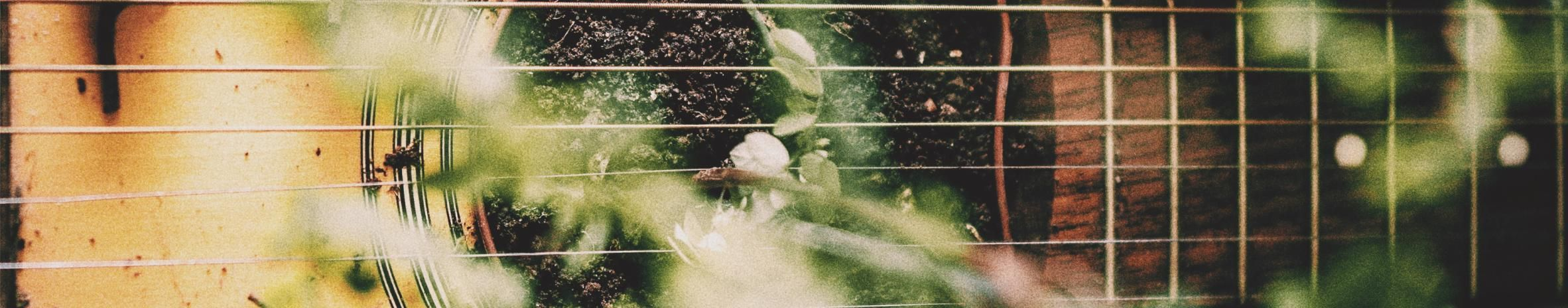 Imagem de capa de Tamarindus