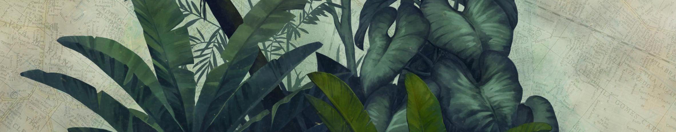 Imagem de capa de Jova