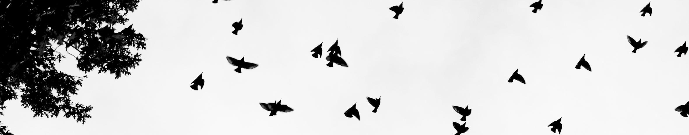 Imagem de capa de Ledno