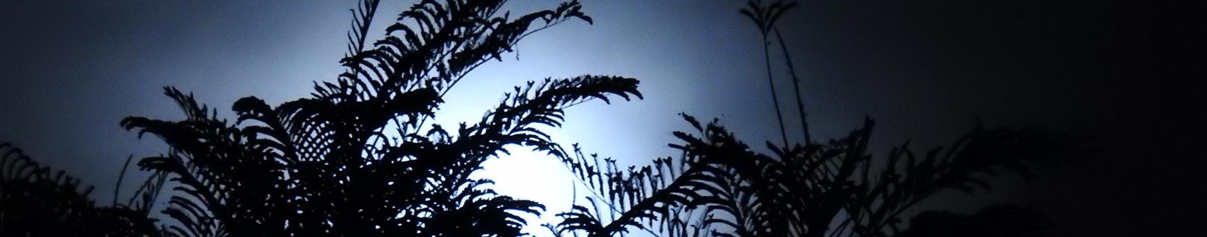 Imagem de capa de Pedra Maia