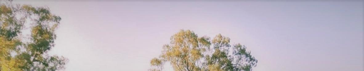 Imagem de capa de Graci