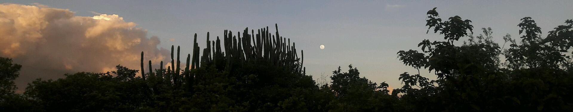 Imagem de capa de Udinho Lima