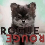 Rogue Rouge}