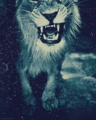 Leões da Arca